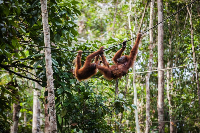 Indonesia - North Sumatra - Bukit Lawang