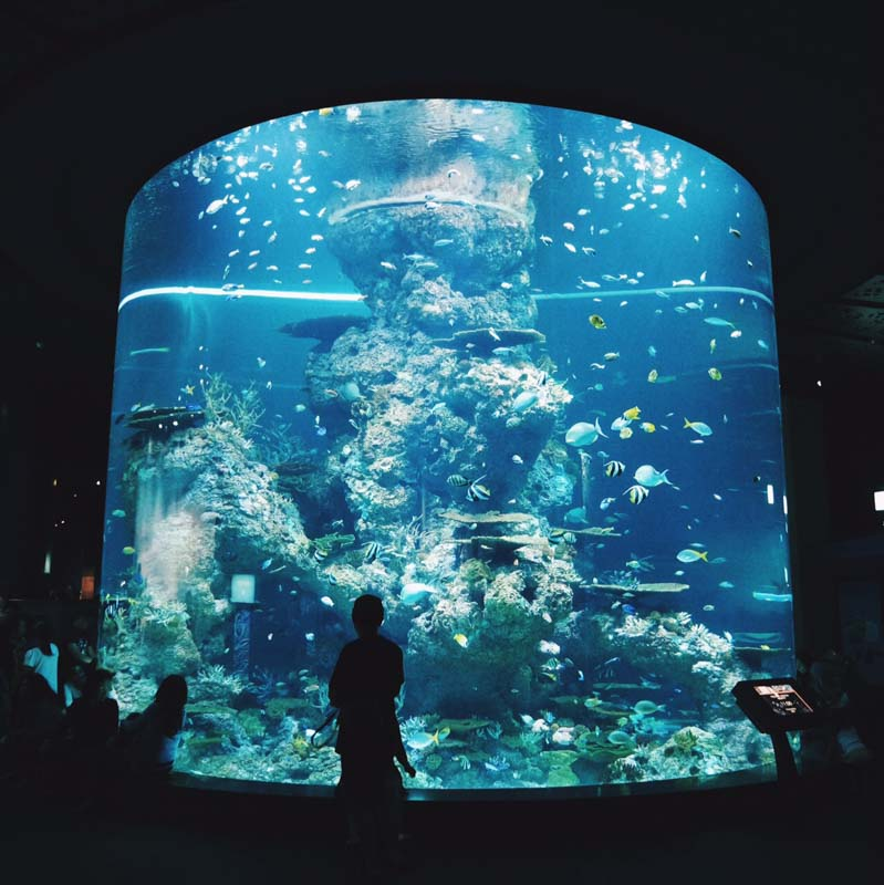 sentosa-staycation-aquarium