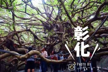 彰化景點推薦 哇~真的有會走路的榕樹!竹塘九龍大榕公-獨木成林奇觀.全國第一榕樹王.樹齡達400多歲