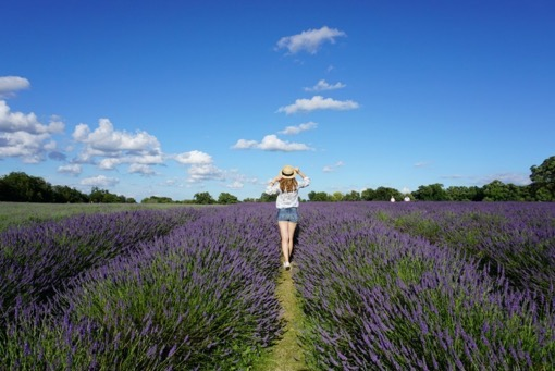 You Could Travel and Enjoying Lavender Fields, London