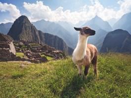 泛美公路 上的Machu Picchu, Peru