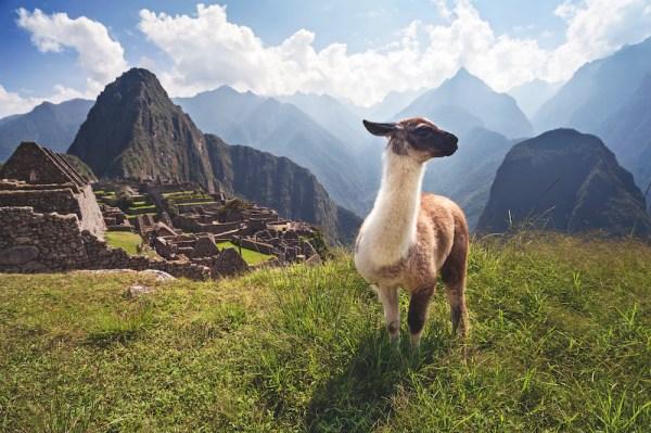 馬丘比丘和羊駝
