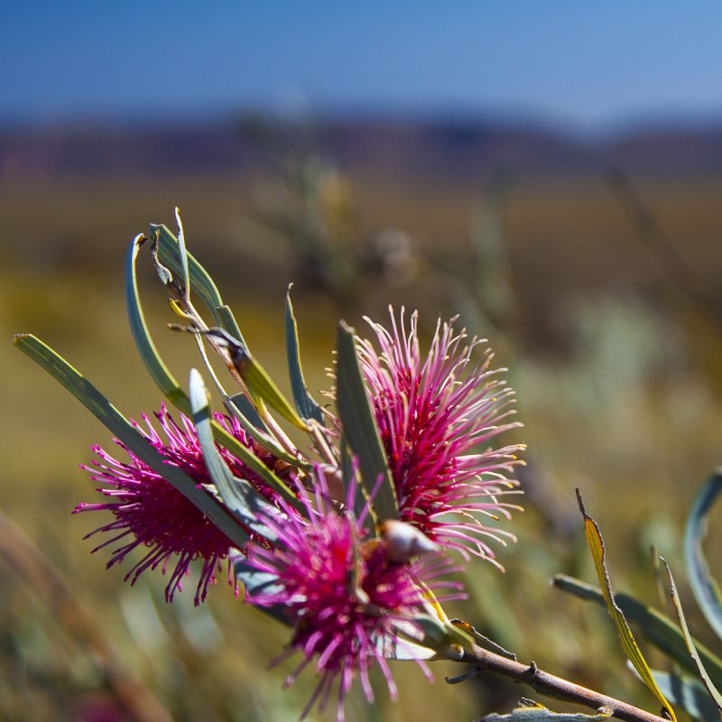 Hiking Larapinta Trail, Northern Territory, Central Australia
