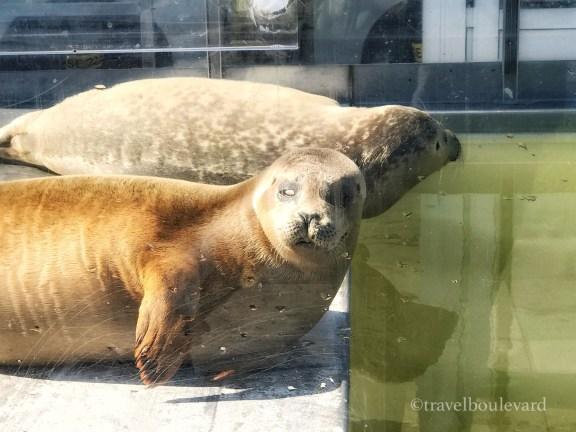 goeree-overflakkee a seal stellendam