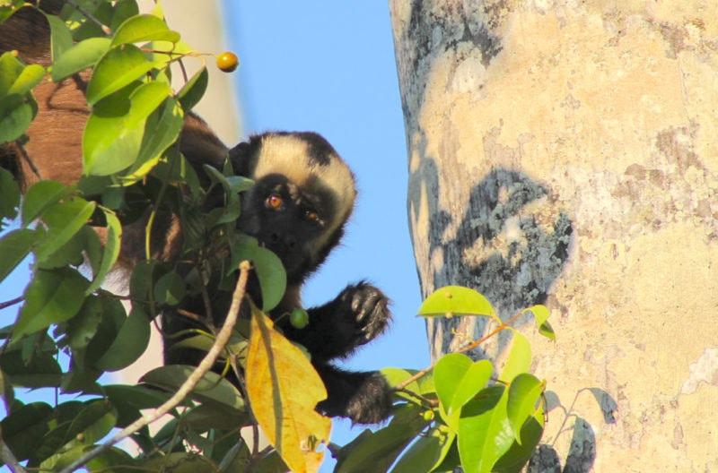 Monkey in Puerto Maldonado Peru