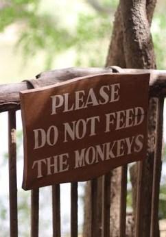 DAKAR Senegal Sugarsheet Reserve bandia monkeys travel Dakar