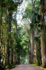 Aburi Gardens Alley