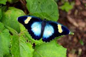 butterlies in Ghana