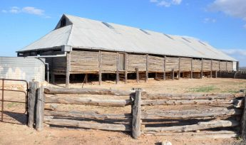 Old shearing shed now museum