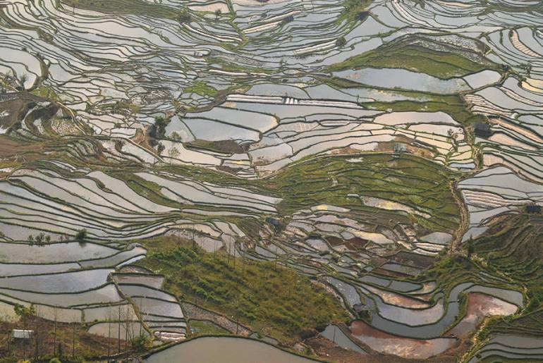 טראסות האורז יואן-יאנג (צילום: טל ניצן)