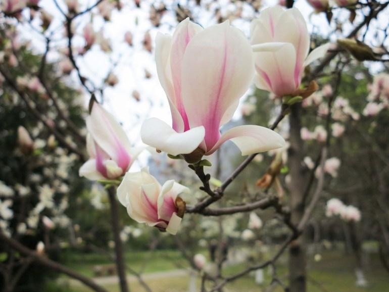 פרחים בפארק הפגודה (צילום: גיא להב)