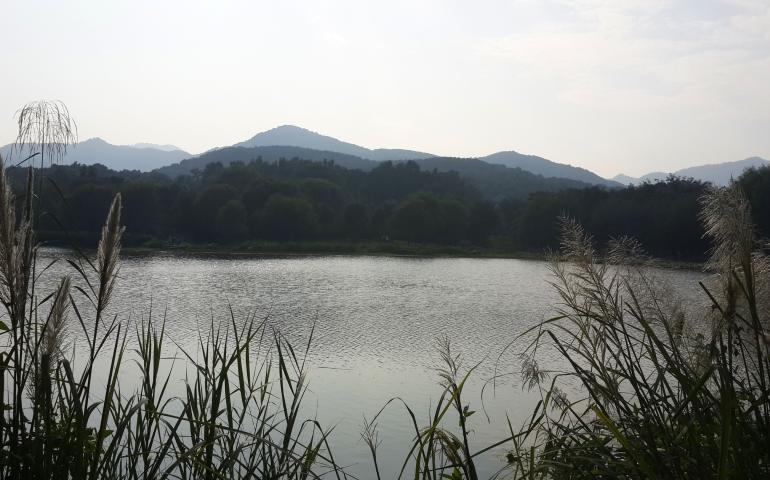 פסטורליה ושקט בצד הפראי של האגם (צילום: טל ניצן)