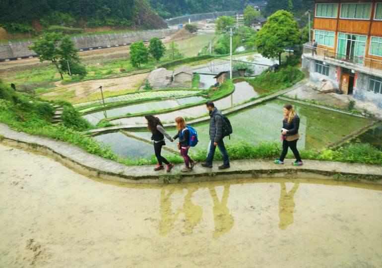 טראסות אורז בדה-טאנג (צילום: יובל לוי)