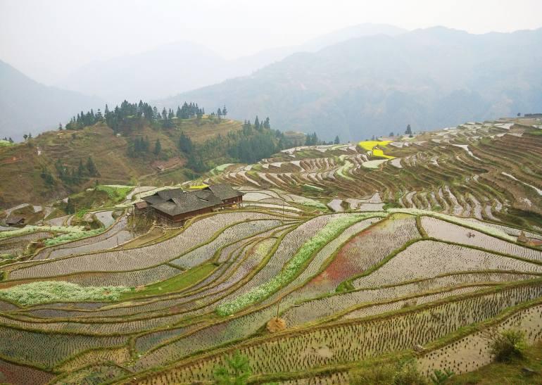 טיול בגווידז'ואו. טראסות אורז במחוז הכפרי (צילום: יובל לוי)