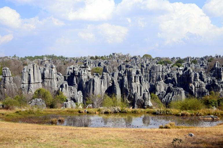 יער האבנים. אלפי חרוטי אבן משוננים (צילום: טל ניצן)