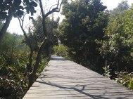 Mangrove trees on Qi'au Island near Zhuhai