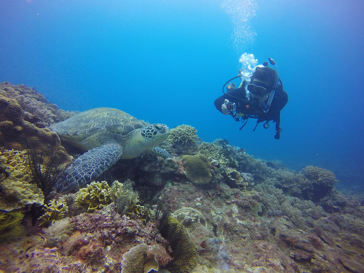 哇!海龜  小琉球生態低碳之旅