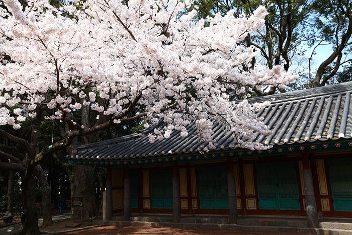 花樂ME.韓國.春遊選韓國,幸福賞花趣