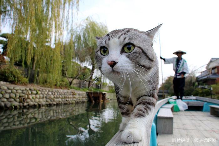 日本人氣明星「旅貓喵吉」帶路!他完成47都道府縣制霸