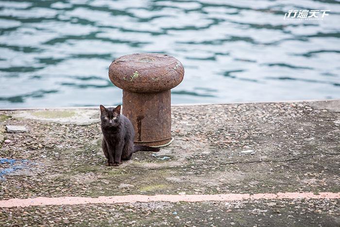 台灣最東馬崗漁村是「貓鄉」 貓咪與人比例1:2