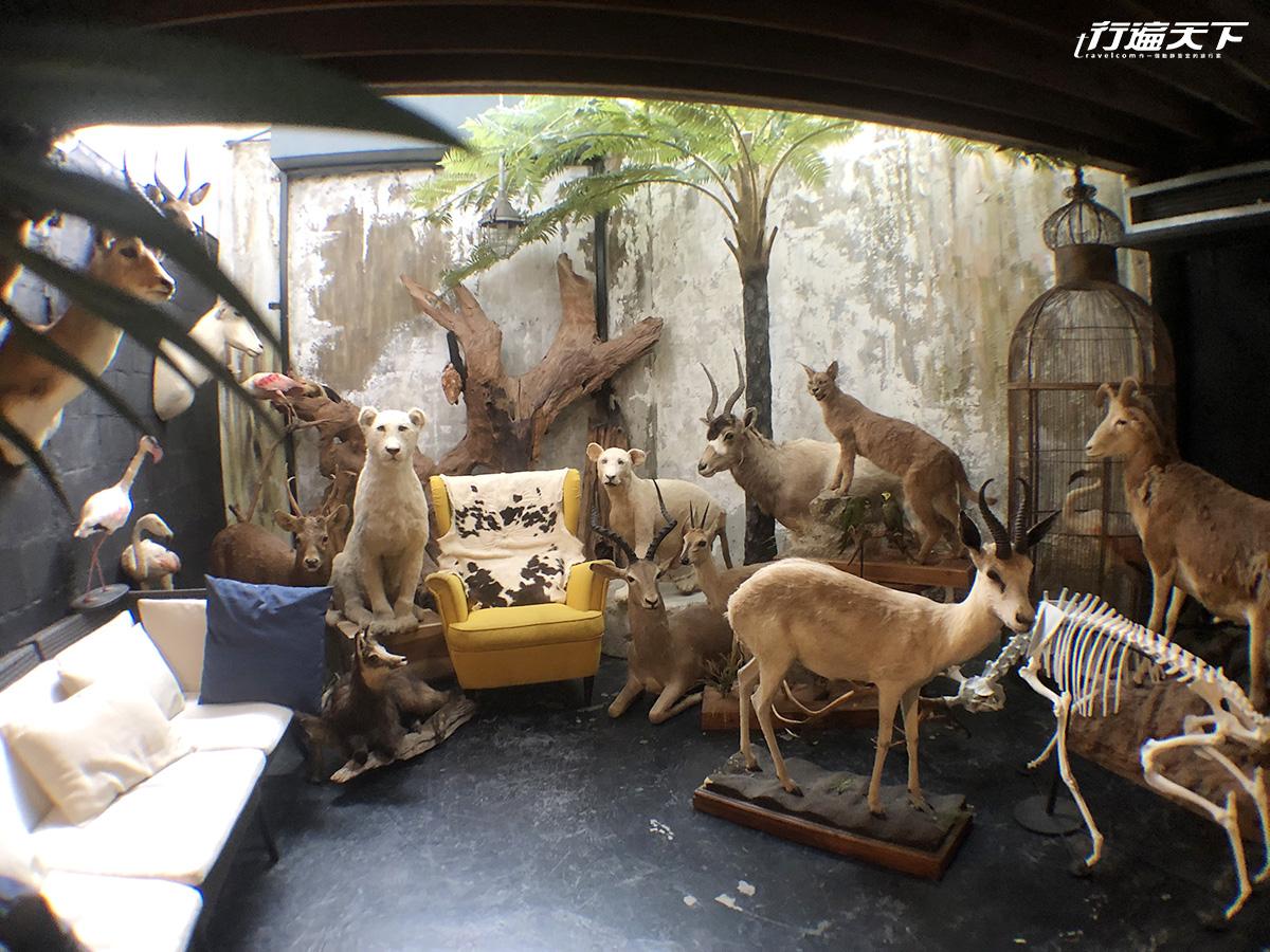 驚!入住這間旅館和動物標本一起睡