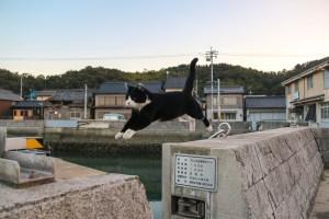 把你最厲害的照片拿出來就有機會免費遊日本岡山