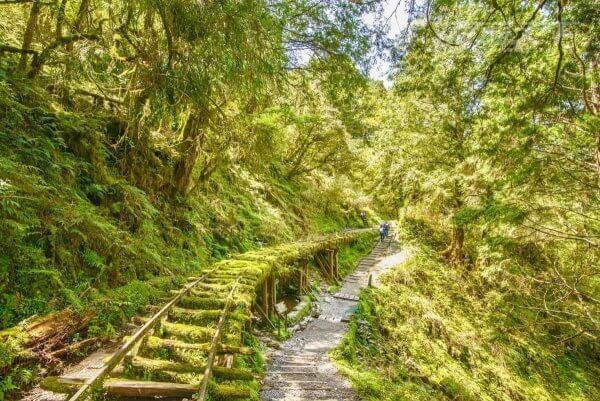 全球最美秘境步道在宜蘭 這個角度最好拍 2