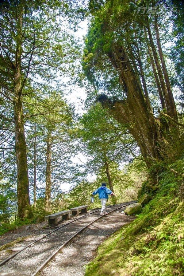 全球最美秘境步道在宜蘭 這個角度最好拍 4