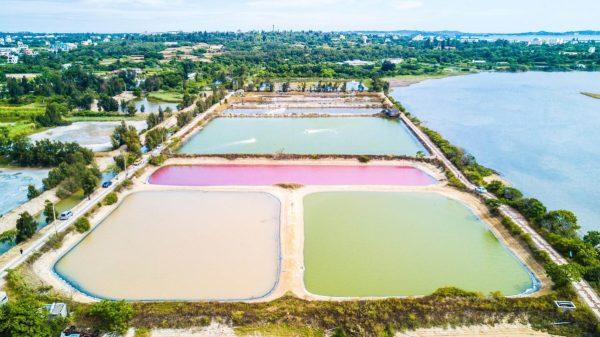 金門,慈湖,古寧頭,粉紅湖,藻類