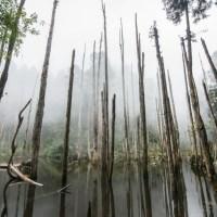 南投景點|北歐風情畫就在竹山祕徑裡 2天1夜的山林小旅行
