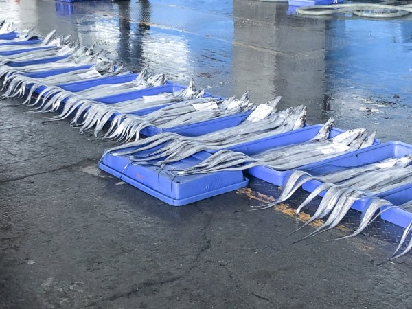 成功漁港,新港漁港,漁獲叫賣,旗魚,白帶魚