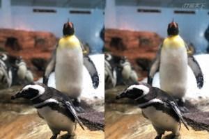 桃園,青埔,xpark,企鵝,AR,麥哲倫企鵝,導覽,企鵝寶寶,小企鵝