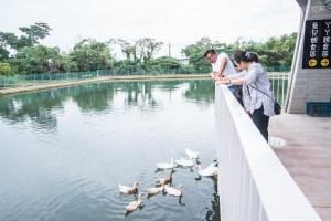 宜蘭,礁溪,宜蘭美食,鴨肉,甲鳥園,鴨料理,綠建築