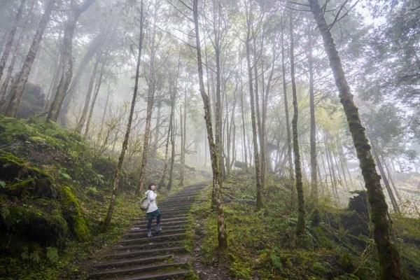 宜蘭,力麗馬告,神木,森林,導覽