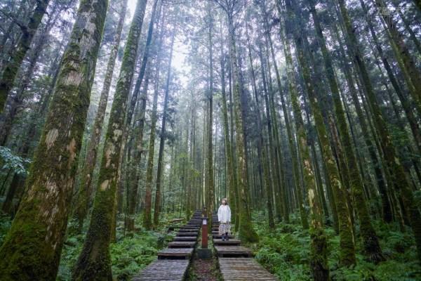 森林,秘境,秘徑,芬多精