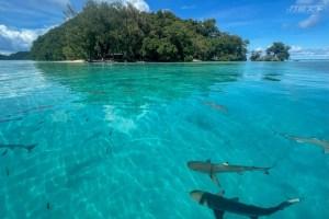 帛琉,旅遊泡泡,鯊魚島