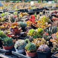 桃園|多肉植物迷的天堂 好買、好逛,還有新鮮多肉體驗活動