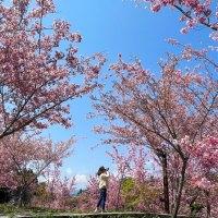 下一趟旅程|福壽山上美麗花海進入粉紅泡泡 下山往宜蘭享受純淨美人湯