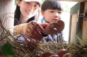 桃園景點,農場體驗,撿雞蛋