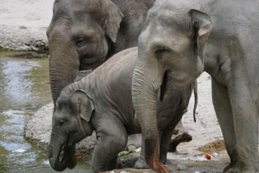 Ocal słonie – nie kupuj kości słoniowej!