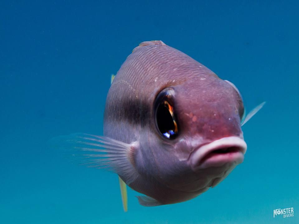 diving pulau weh photo