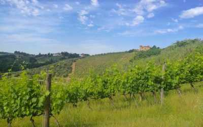 Tuscany from Rome: seven ideas for a fulfilling day trip