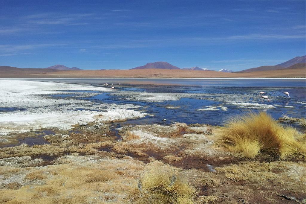 Flamingoes and volcanoes at Eduardo Avaroa National Reserve