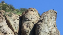 cliff bird