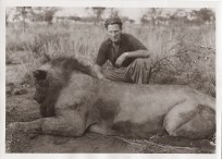 Arthur Moen. Lion Shot Near Embu Mt Kenya 1930 Look at the size of our Lions in the colonial days though!