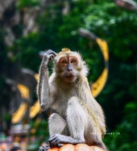 Scimmia a Kuala Lumpur