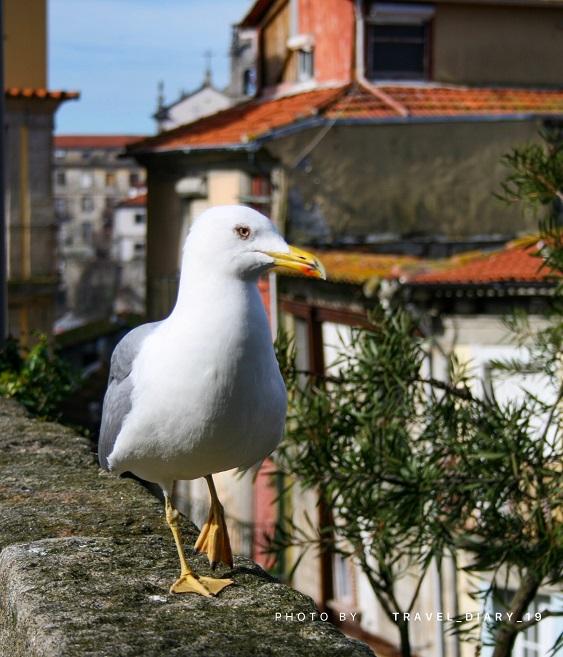 Un bianco gabbiano passeggia per la piazza di Porto