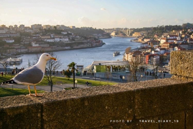 Un gabbiano a Porto