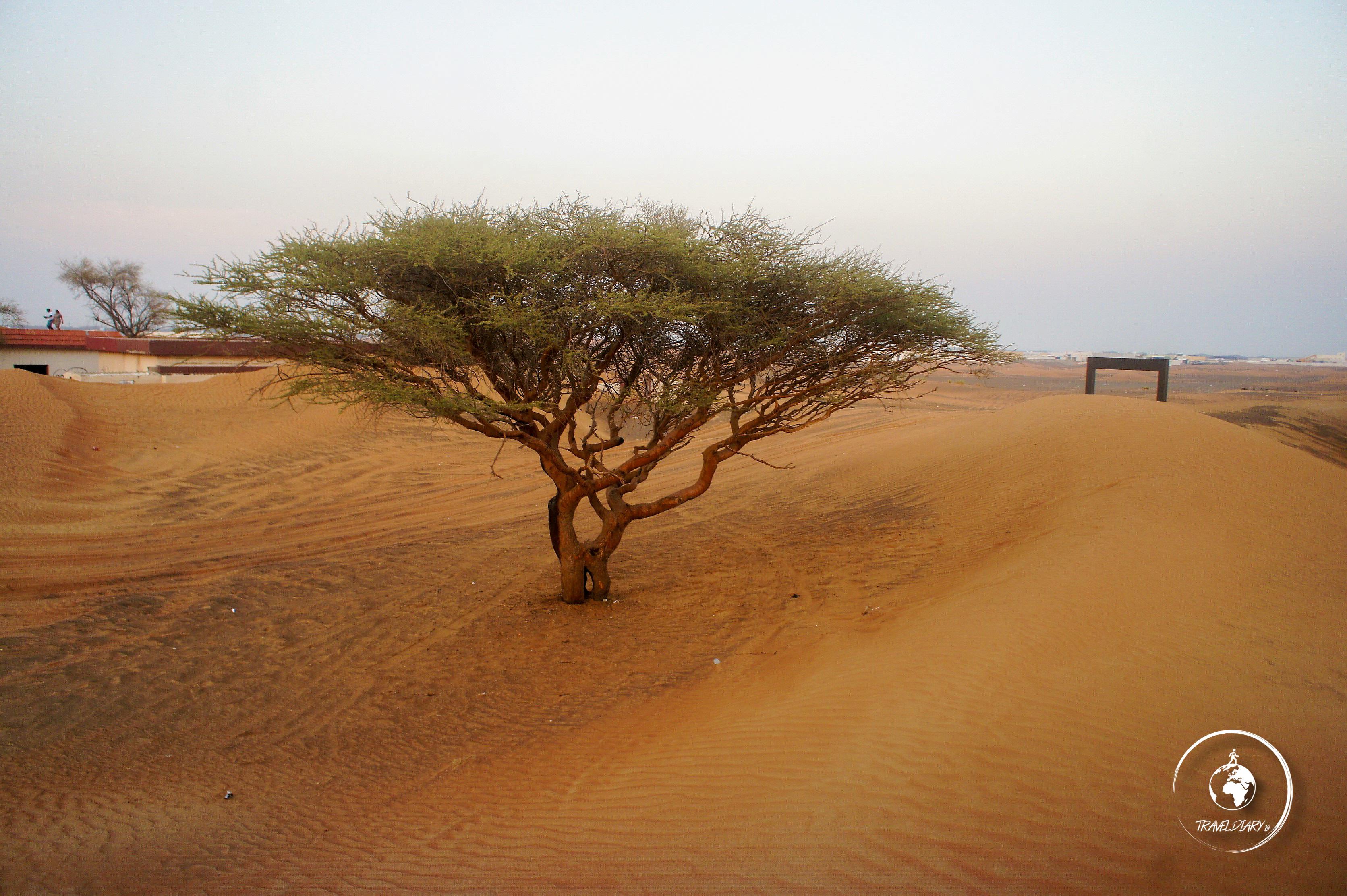 Albero nel deserto vicino ad Al Madam