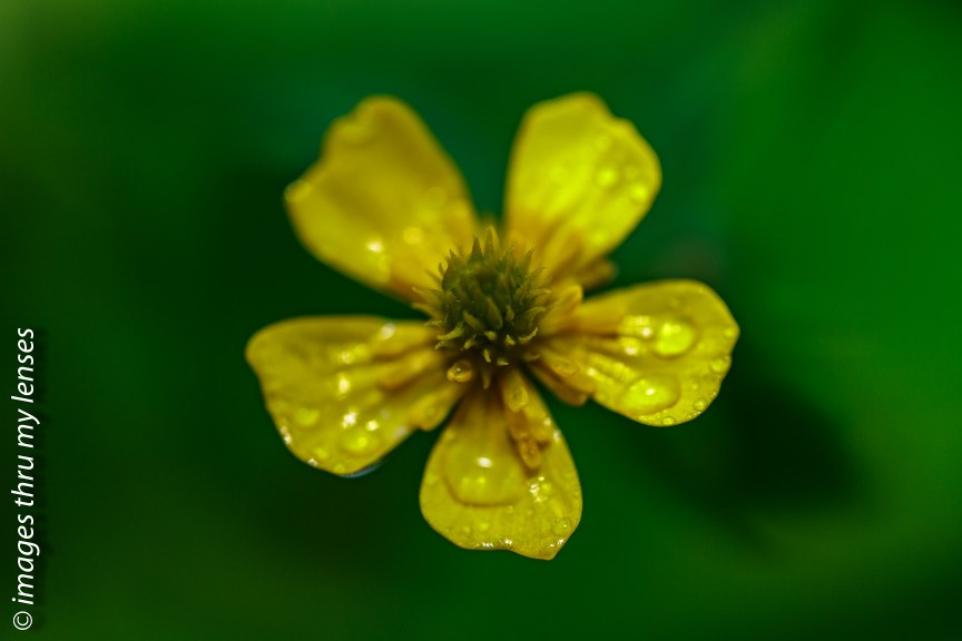 Mandini Trek , alternate option to Valley of Flowers
